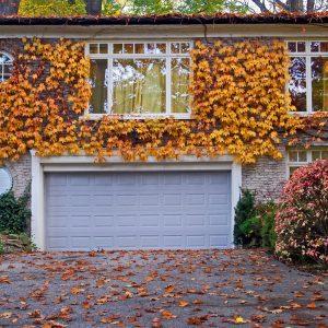 Garage Door with Ivy Around