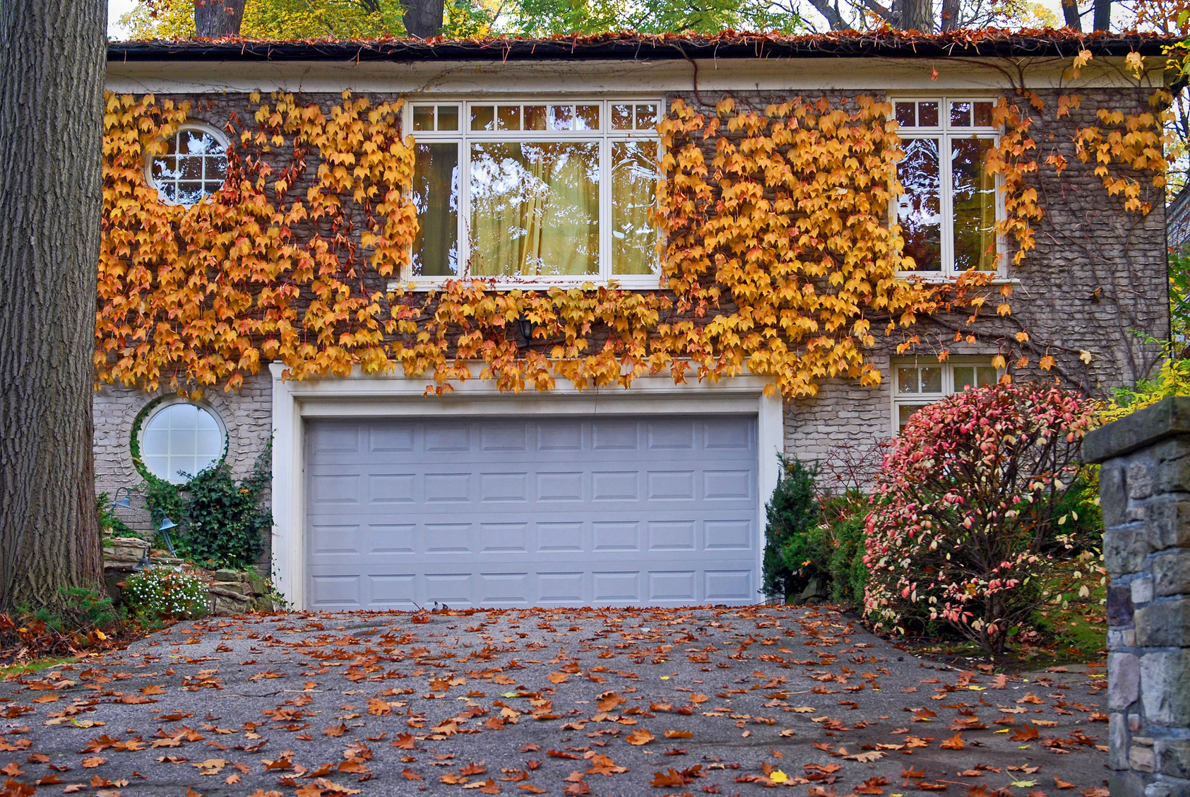 Garage Door with Ivy Around