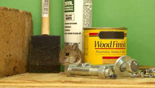 A mouse sits by paint supplies.